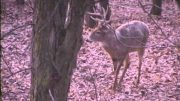 Bow Hunting Whitetail at Iowa Droptine Outfitters