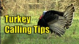 Calling Turkeys with Lee Clark