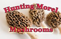 Hunting Morel Mushrooms and Sheds on AO Radio