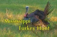 Mississippi Turkey Hunt