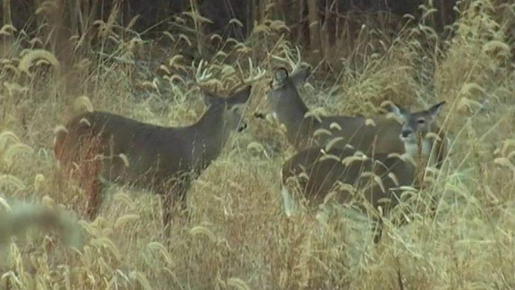 Whitetail Muzzle Loader Hunt