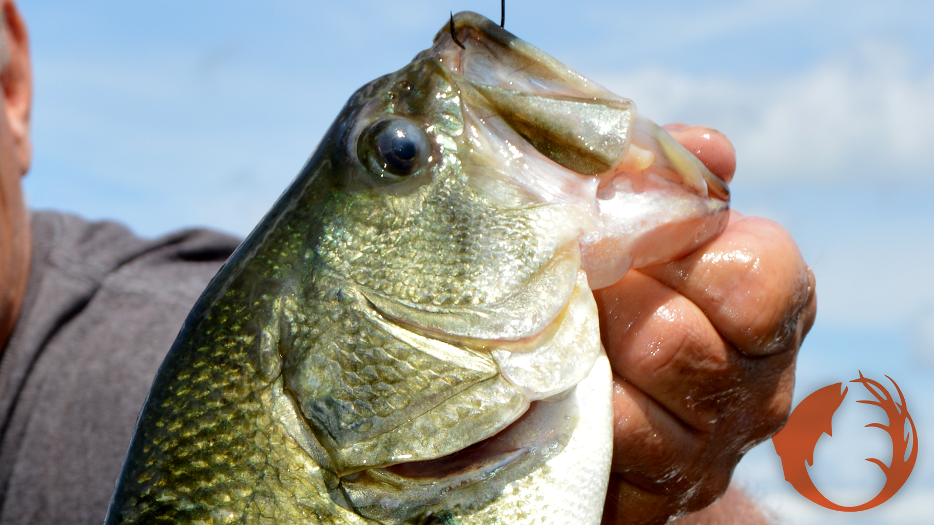 Catch Fish On The Weedline