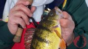 BeVersatileForMoreIceFishingSuccess-Feature