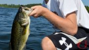 RemindersForSummerFishing-Feature