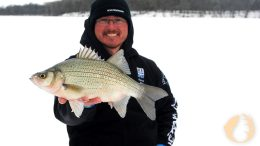 Mid-WinterYellowBass-Feature