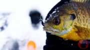 LateSeasonIceFishing-Feature
