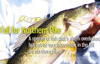 Fall For Northern Pike