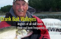 Crank Bait Walleyes