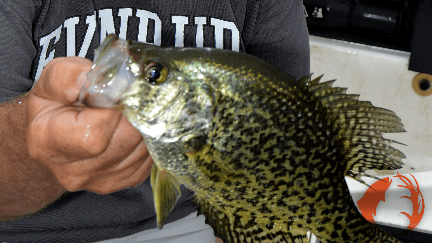 Catching Crappies