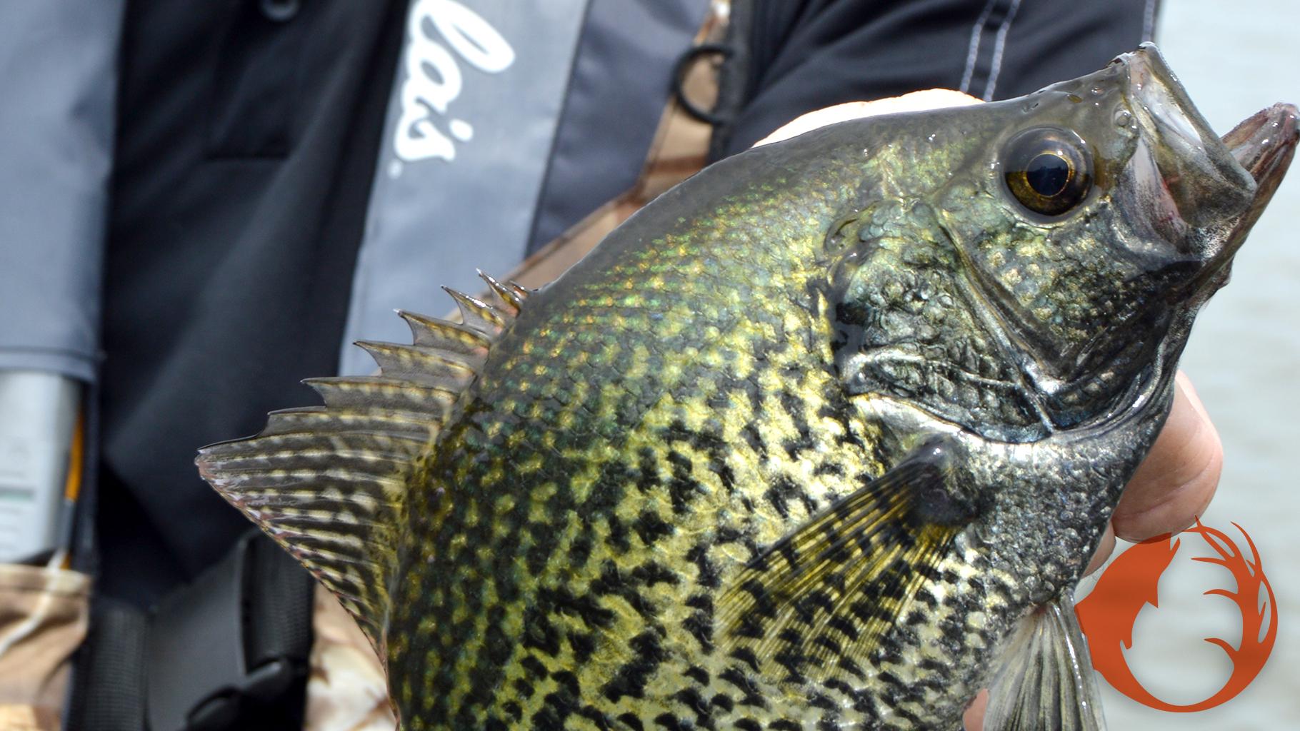 Experience Early Season Fishing Success