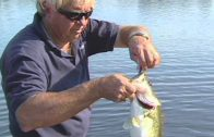 How to Catch Schooling Bass