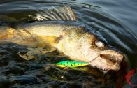 Catch Summer Walleyes on a Winter Lure