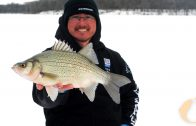 Mid-Winter Yellow Bass