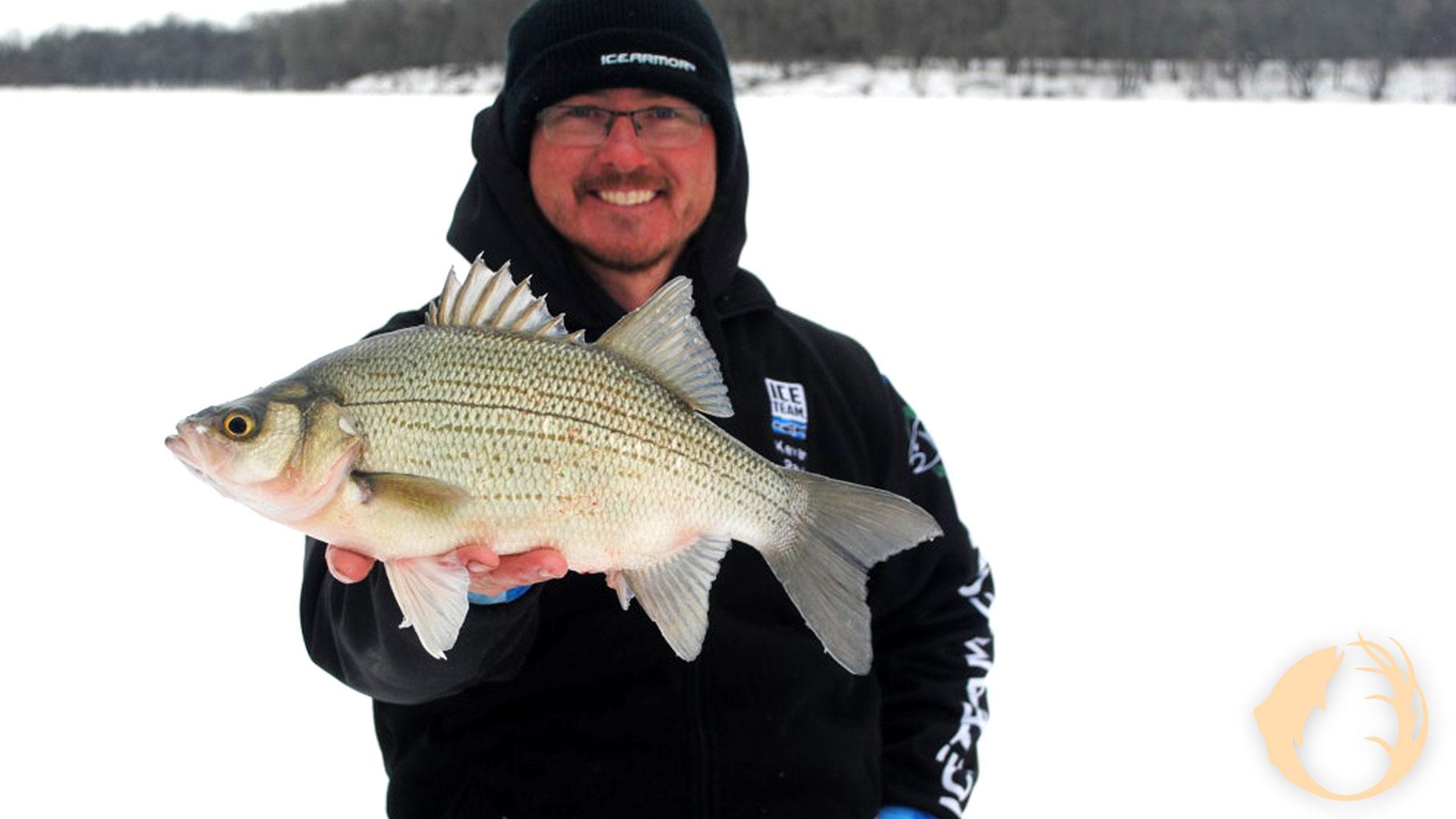 Mid-Winter Yellow Bass