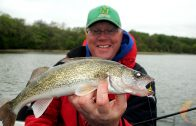 Walleyes on Jigs