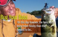 Bug Your Bass