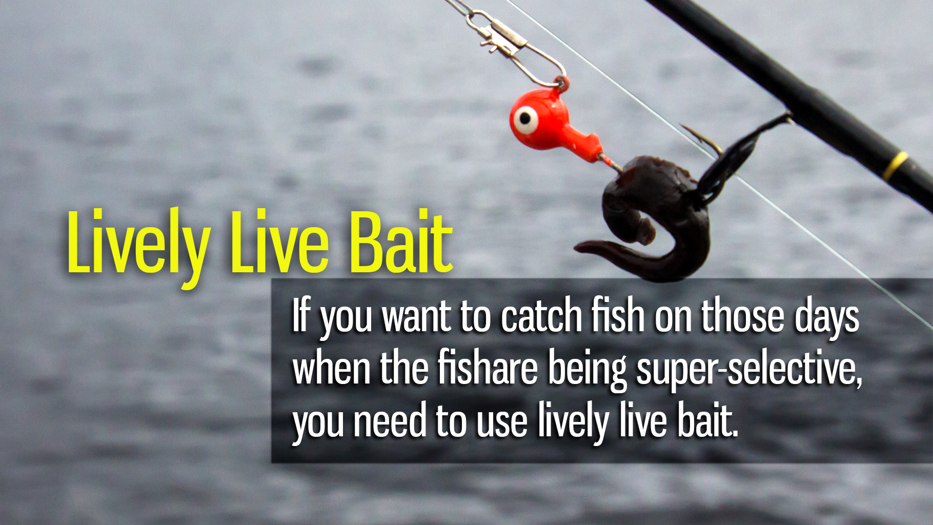 Lively Live Bait for More Summer Fish