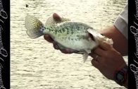 Crappie – Dealing with Spring Cold Fronts