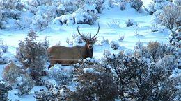 New Mexico Elk Deep Snow Hunt